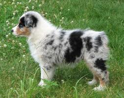 Jesse and I really want a puppy like this one.