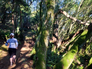 We called this section leading up to Cardiac Hill on the Dipsea the enchanted forest.