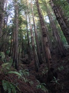 Standing amongst giants on the Lost Trail