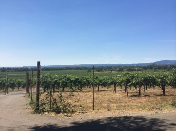 Gorgeous wine country.