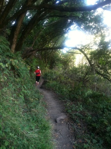 I didn't take any photos during the race, but this one is from the Redwood Creek Trail.